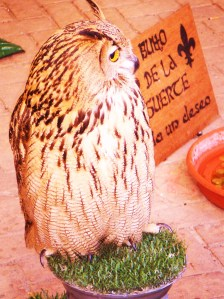 Eagle Owl at the Fair.